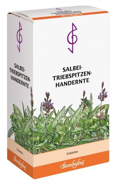 Salbei-Triebspitzen-Handernte